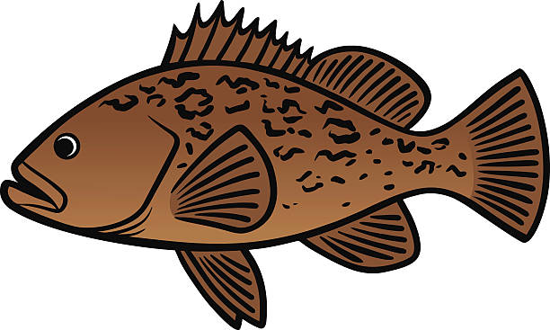 Grouper clipart #3, Download drawings
