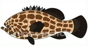 Grouper clipart #19, Download drawings