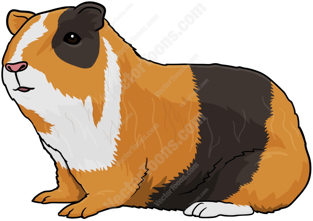 Guinea Pig clipart #4, Download drawings