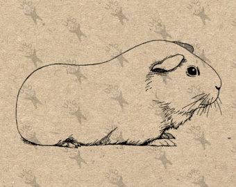 Guinea Pig svg #9, Download drawings