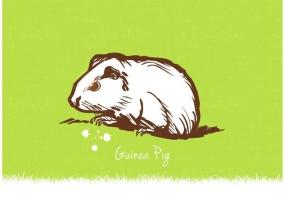 Guinea Pig svg #7, Download drawings