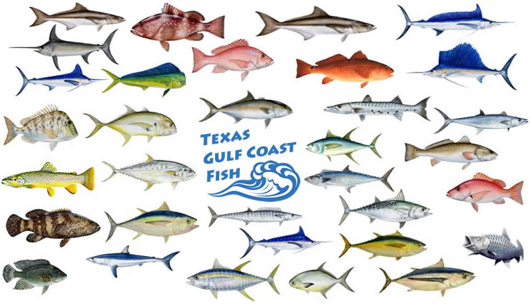 Gulf Coast clipart #5, Download drawings