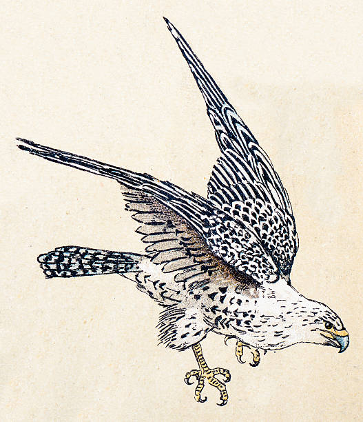 Gyrfalcon clipart #16, Download drawings
