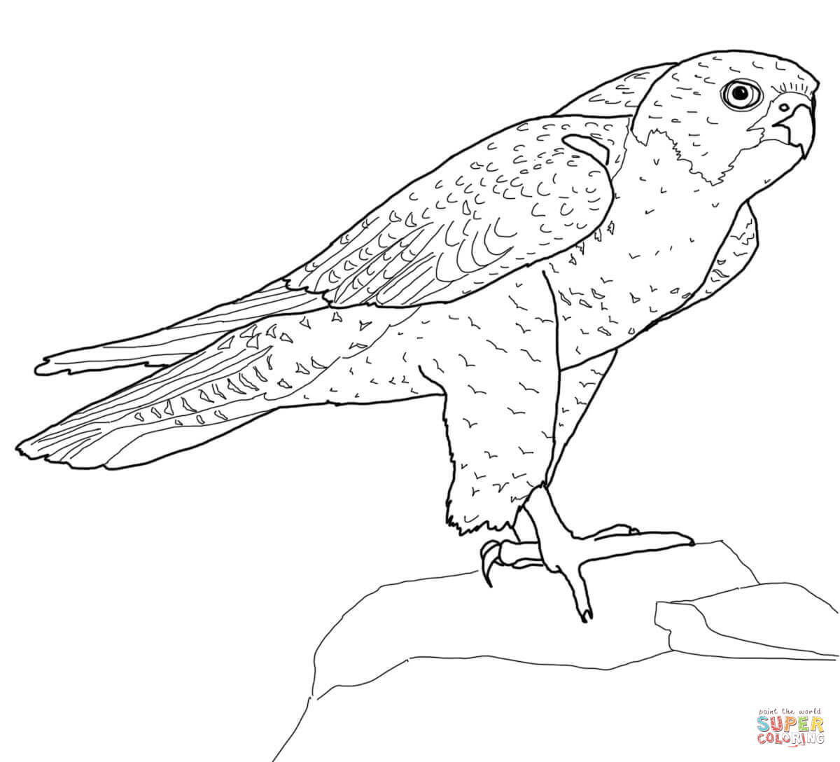 Prairie Falcon coloring #12, Download drawings