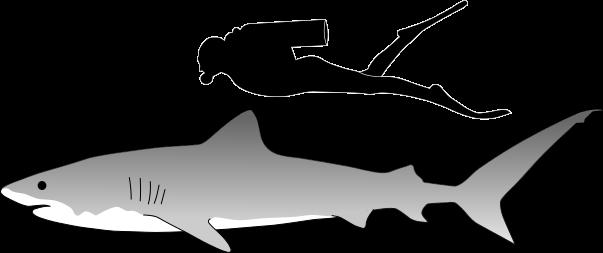 Tiger Shark svg #20, Download drawings