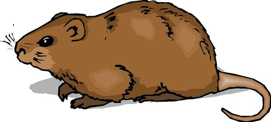 Hamster clipart #1, Download drawings