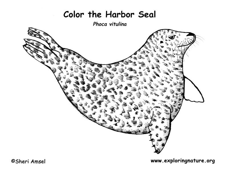 Harbor coloring #11, Download drawings