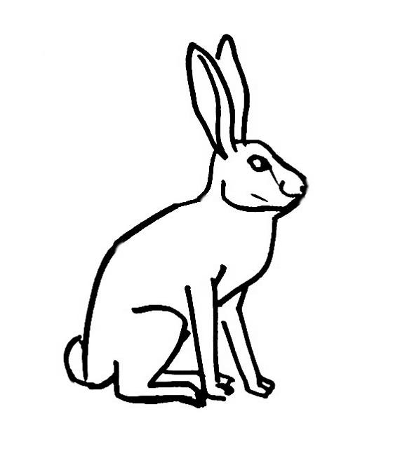 Hare Coloring Download Hare Coloring