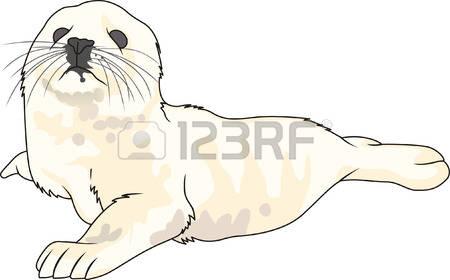 Harp Seal clipart #9, Download drawings