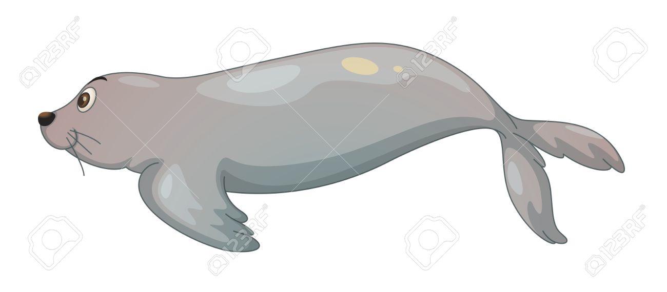 Harp Seal clipart #6, Download drawings