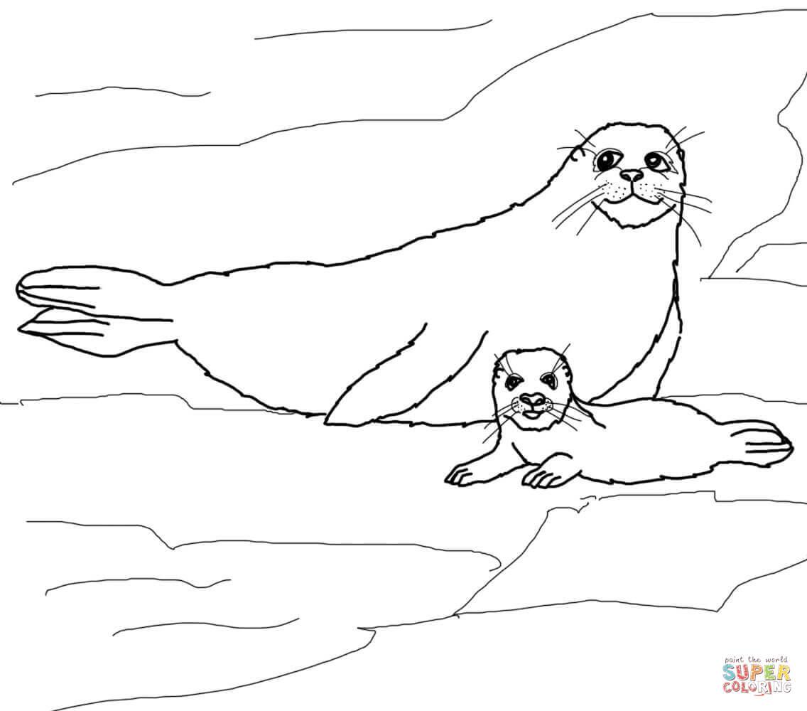 Harp Seal clipart #7, Download drawings