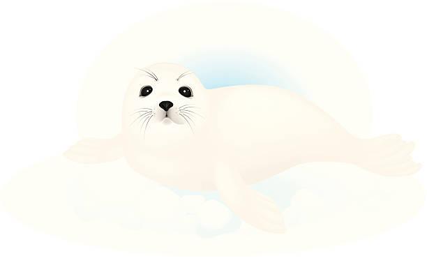 Harp Seal clipart #19, Download drawings