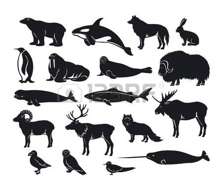 Harp Seal clipart #5, Download drawings
