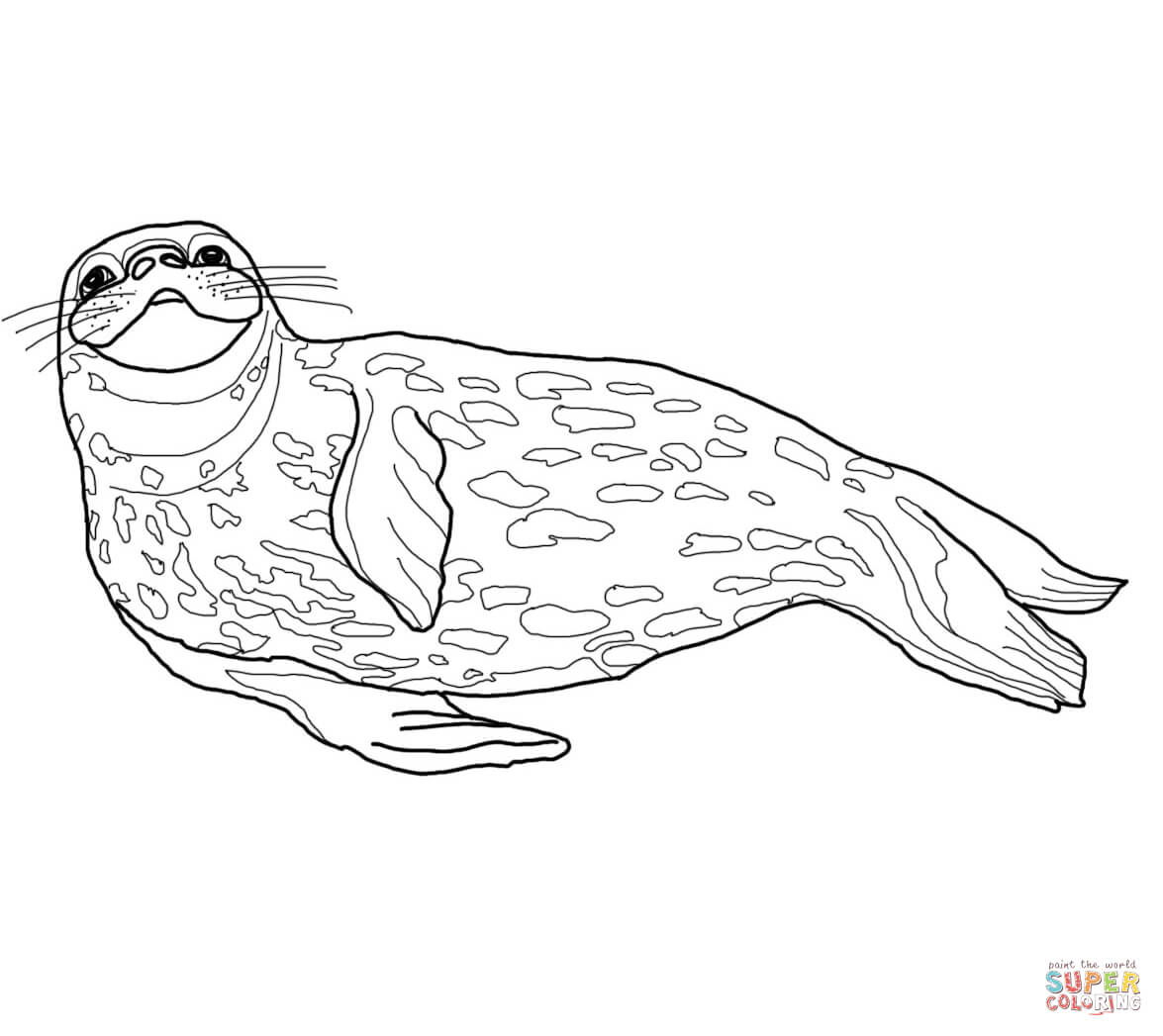 Leopard Seal coloring #12, Download drawings