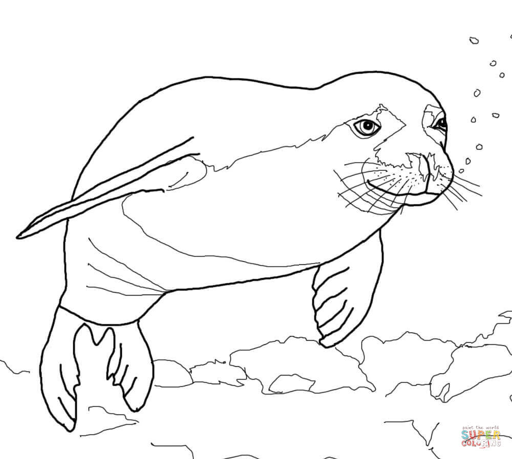 Leopard Seal coloring #4, Download drawings