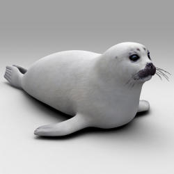 Harp Seal svg #14, Download drawings