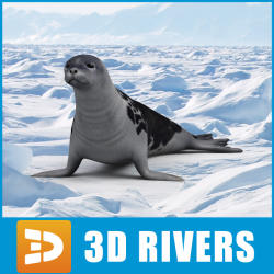 Harp Seal svg #9, Download drawings