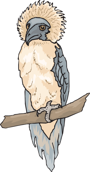 Harpy Eagle clipart #3, Download drawings