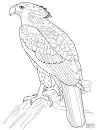 Harpy Eagle clipart #6, Download drawings