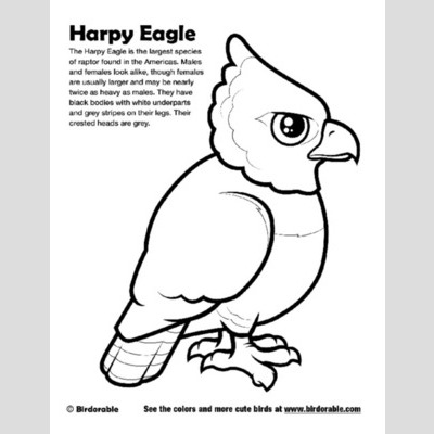 phillipine eagle coloring pages - photo#15