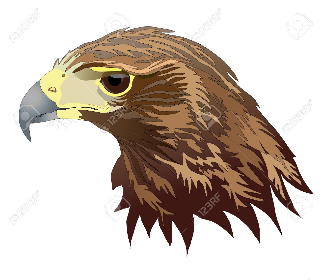 Harris Hawk clipart #18, Download drawings