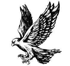 Harris Hawk clipart #2, Download drawings
