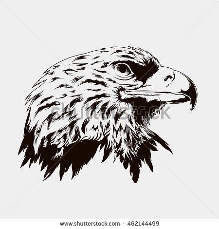 Harris Hawk clipart #6, Download drawings