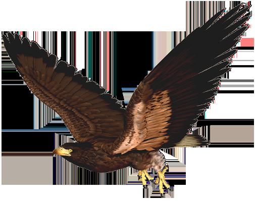 Harris Hawk clipart #17, Download drawings