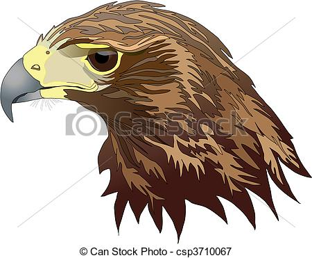 Harris's Hawk clipart #17, Download drawings