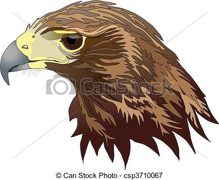 Harris's Hawk clipart #17, Download drawings