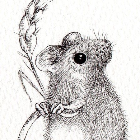 Harvest Mouse clipart #15, Download drawings