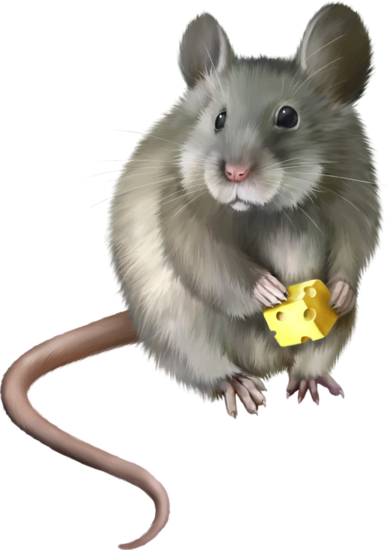 Harvest Mouse clipart #4, Download drawings