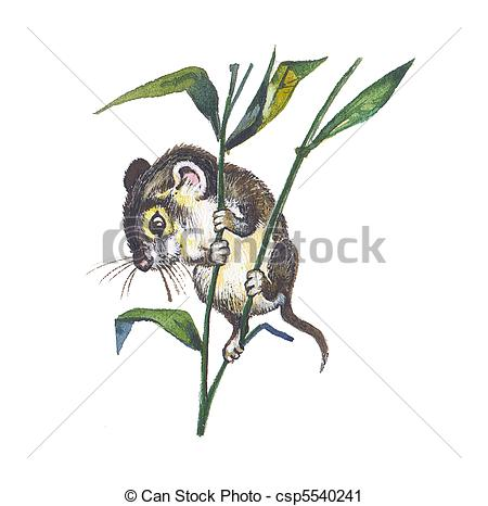 Harvest Mouse clipart #19, Download drawings