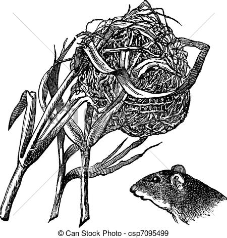 Harvest Mouse clipart #9, Download drawings