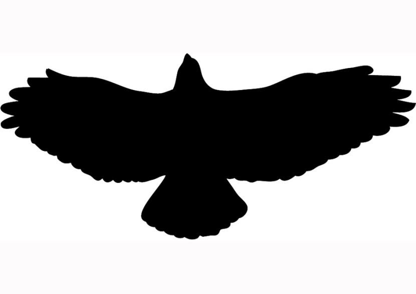 Hawk clipart #3, Download drawings