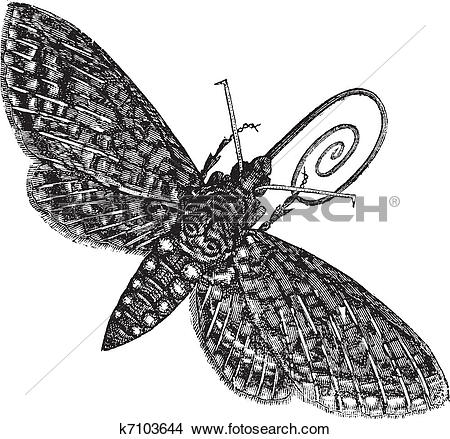 Hawk Moth clipart #10, Download drawings