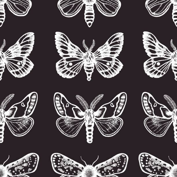 Hawk Moth clipart #3, Download drawings
