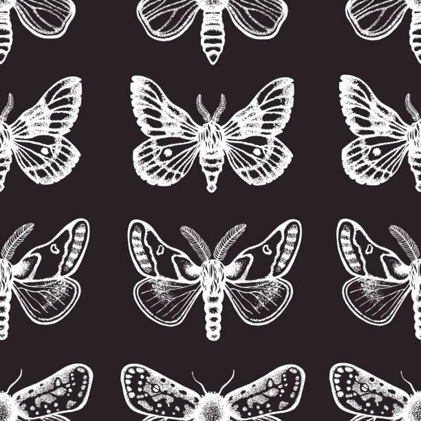 Hawk Moth clipart #18, Download drawings