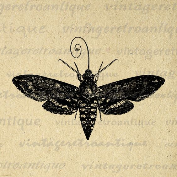 Hawk Moth clipart #6, Download drawings