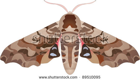 Hawk Moth clipart #14, Download drawings