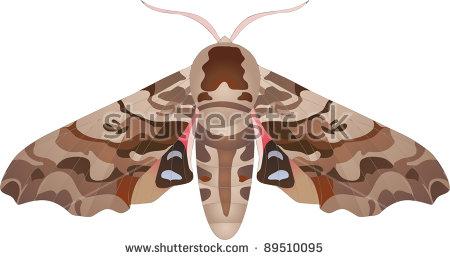Hawk Moth clipart #7, Download drawings