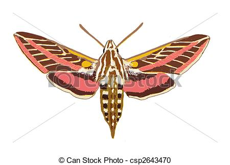 Hawk Moth clipart #6, Download drawings