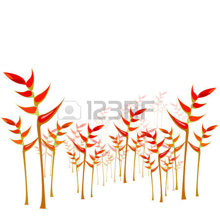 Heliconia clipart #8, Download drawings