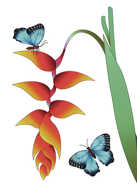 Heliconia clipart #14, Download drawings