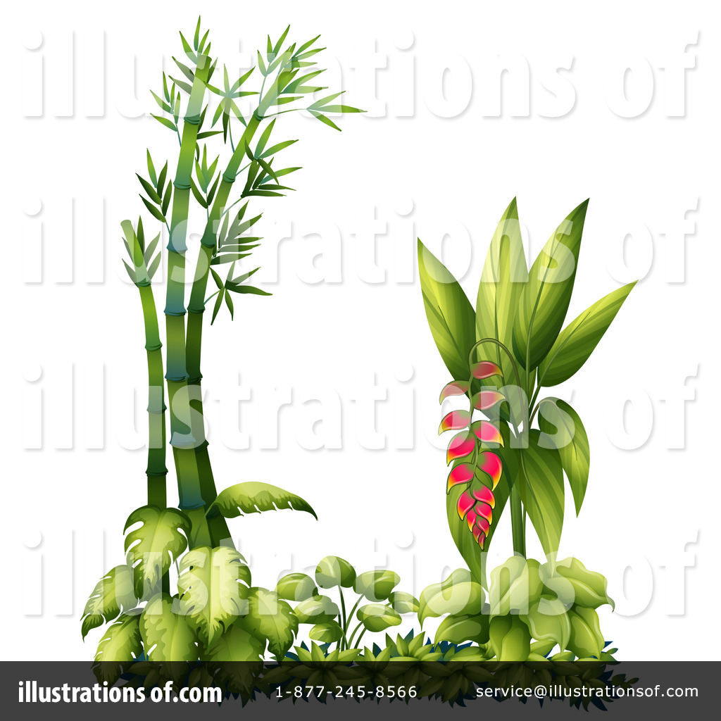 Heliconia clipart #3, Download drawings