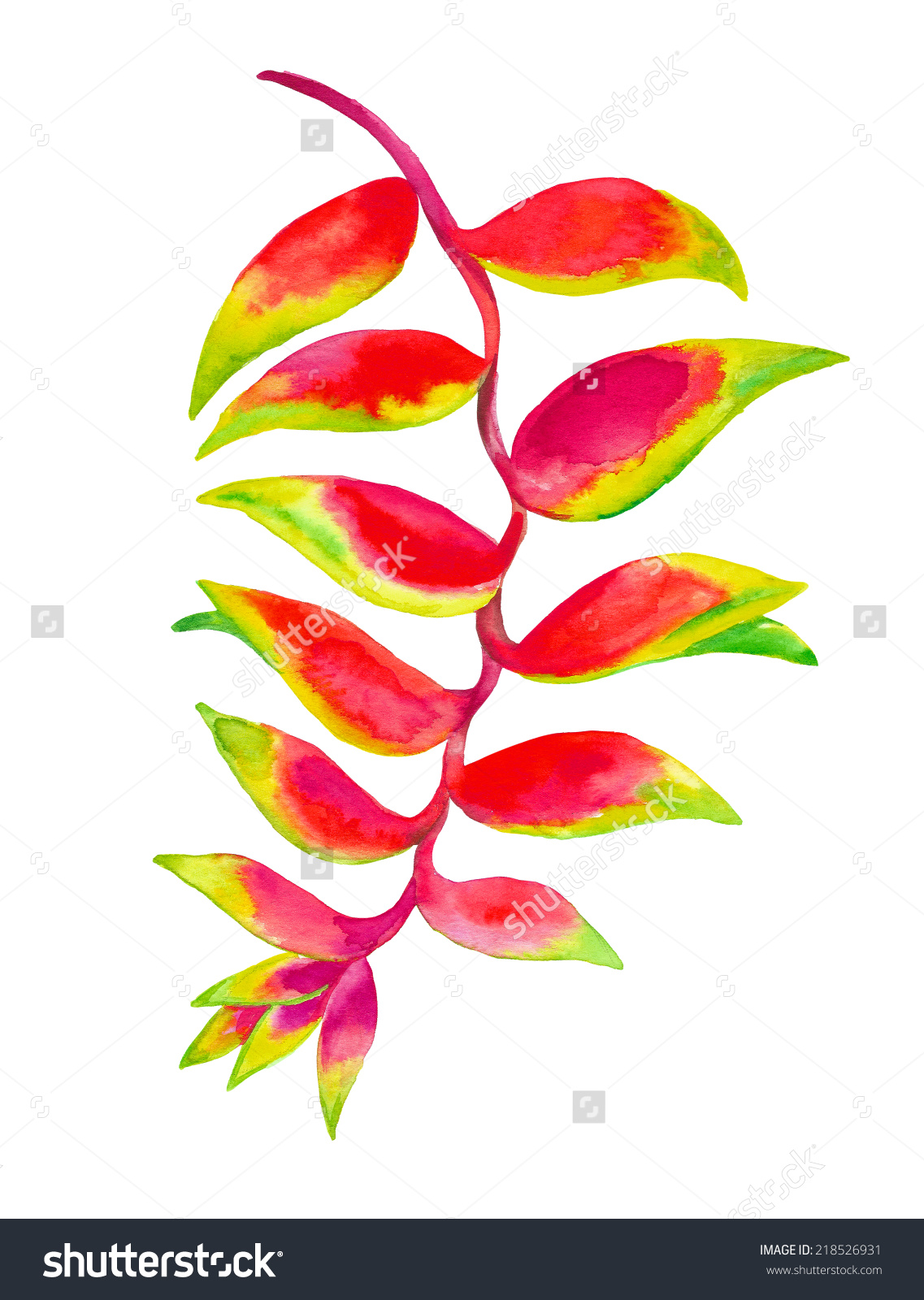 Heliconia clipart #19, Download drawings
