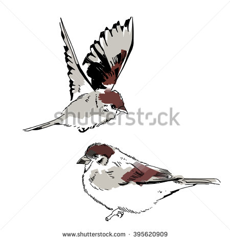 Henslow's Sparrow clipart #13, Download drawings