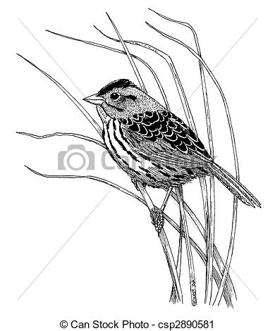 Henslow's Sparrow clipart #14, Download drawings