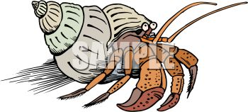 Hermit Crab clipart #20, Download drawings