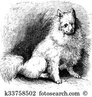 Heterochromia clipart #5, Download drawings